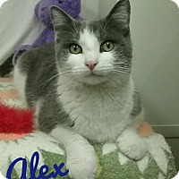 Adopt A Pet :: Alex - Kendallville, IN