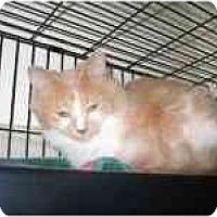 Adopt A Pet :: Patty - Milwaukee, WI
