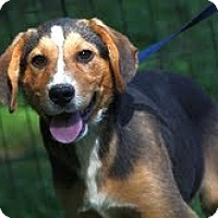 Adopt A Pet :: Rupert ($200 adoption fee) - Staunton, VA