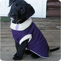Adopt A Pet :: Olive - Rigaud, QC