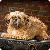 Adopt A Pet :: Adele - Owensboro, KY