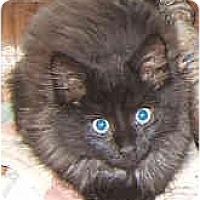 Adopt A Pet :: Ken - Dallas, TX