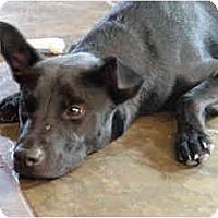 Adopt A Pet :: Roslyn - Scottsdale, AZ