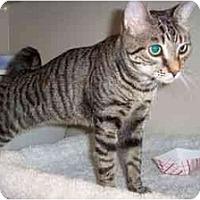 Adopt A Pet :: Wesley - Secaucus, NJ