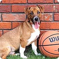 Adopt A Pet :: *Sox - PENDING - Westport, CT