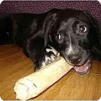 Adopt A Pet :: Nikki - Nashville, TN