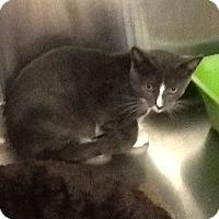Adopt A Pet :: Rudi - Colmar, PA