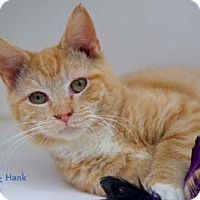 Adopt A Pet :: Hank - Merrifield, VA