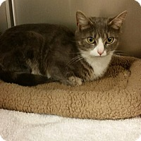 Adopt A Pet :: Maggie - bridgeport, CT