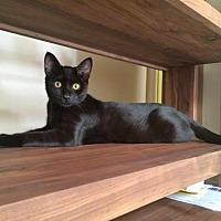 Adopt A Pet :: Fleetwood - Pacific Palisades, CA