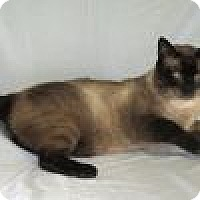 Adopt A Pet :: Mishi - Powell, OH