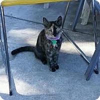 Adopt A Pet :: Two Faced - San Jose, CA