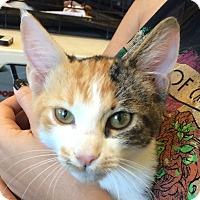 Adopt A Pet :: Butter - Winchester, CA