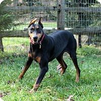 Adopt A Pet :: BLISS - Greensboro, NC