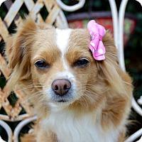 Adopt A Pet :: Autumn - Irvine, CA