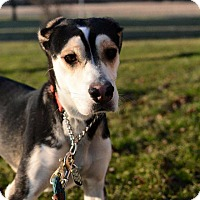 Adopt A Pet :: Cooper - Mansfield, OH