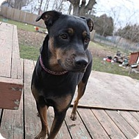Adopt A Pet :: Jessie - Woodstock, ON