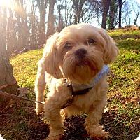 Adopt A Pet :: Napoleon (RBF) - Washington, DC