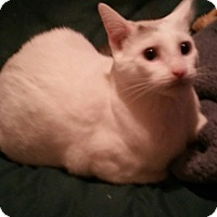 Adopt A Pet :: Squeaky - Rockford, IL