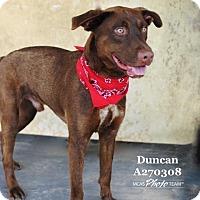 Adopt A Pet :: DUNCAN - Conroe, TX