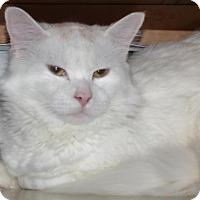 Adopt A Pet :: Bernie - Shaftsbury, VT
