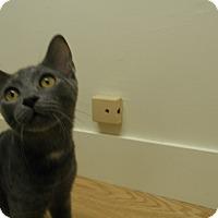 Adopt A Pet :: Beacon - Milwaukee, WI