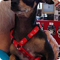 Adopt A Pet :: SOLITA - Hurricane, UT