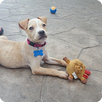 Adopt A Pet :: Maylee - Middlesex, NJ