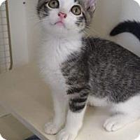 Adopt A Pet :: Rupert - Kansas City, MO