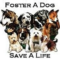Adopt A Pet :: Foster Homes Needed - Lakeland, FL