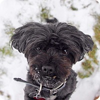 Adopt A Pet :: Elvis - Coopersburg, PA