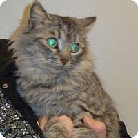 Adopt A Pet :: Harper - Wildomar, CA
