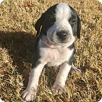 Adopt A Pet :: Norman - Norman, OK