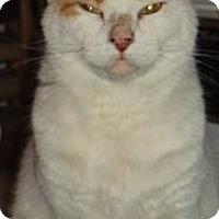 Adopt A Pet :: Kenny - Bear, DE