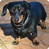 Adopt A Pet :: Harvey - Athens, GA