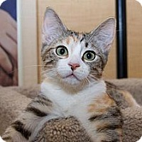 Adopt A Pet :: Butterscotch - Irvine, CA
