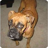 Adopt A Pet :: Rylee - Gainesville, FL