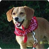 Adopt A Pet :: Rover - Honaker, VA