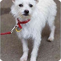 Adopt A Pet :: Bennie - Portland, OR