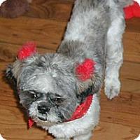 Adopt A Pet :: BaoBao - Homer Glen, IL