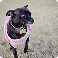 Adopt A Pet :: Claire - Salt Lake City, UT