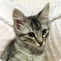 Adopt A Pet :: Doctor - Chandler, AZ
