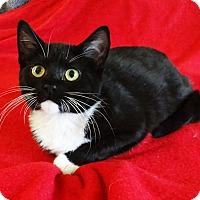 Adopt A Pet :: Julie - N. Billerica, MA