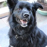 Adopt A Pet :: CHELSEA (Courtesy List) - San Pedro, CA