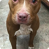 Adopt A Pet :: ROSIE - Pittsburgh, PA