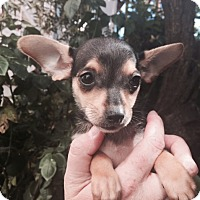 Adopt A Pet :: Lundy - San Francisco, CA