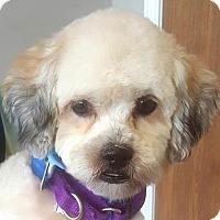 Adopt A Pet :: Charlie - Farmington Hills, MI