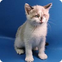 Adopt A Pet :: Fletch - Overland Park, KS