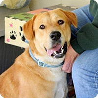 Adopt A Pet :: Della - Holly Springs, NC