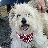 Adopt A Pet :: Frankie - Santa Maria, CA